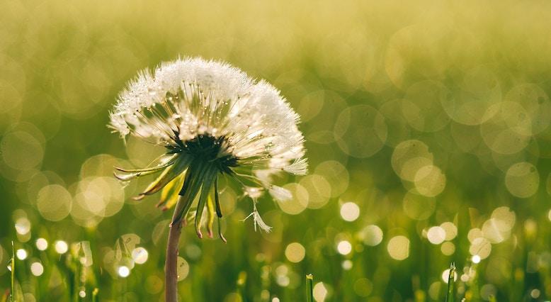 morning routine flower