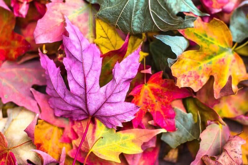 autumn leaves nature