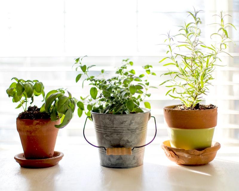 3 plants small plants