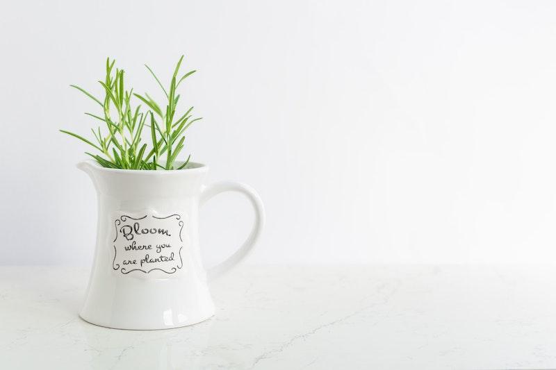 white mug with plant