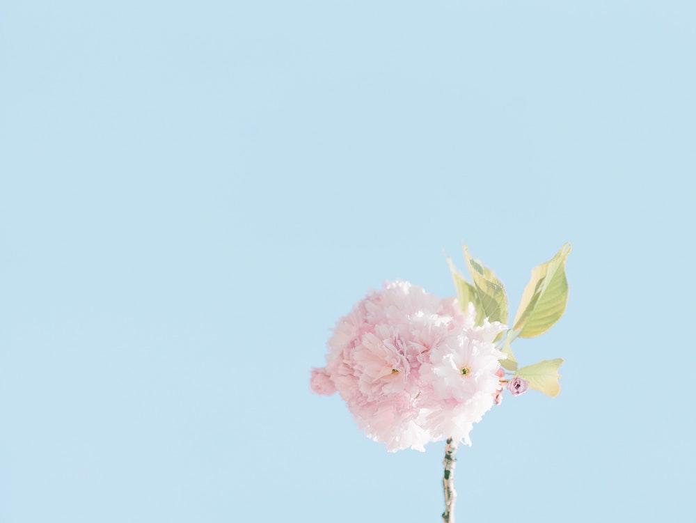 blue-background-flower
