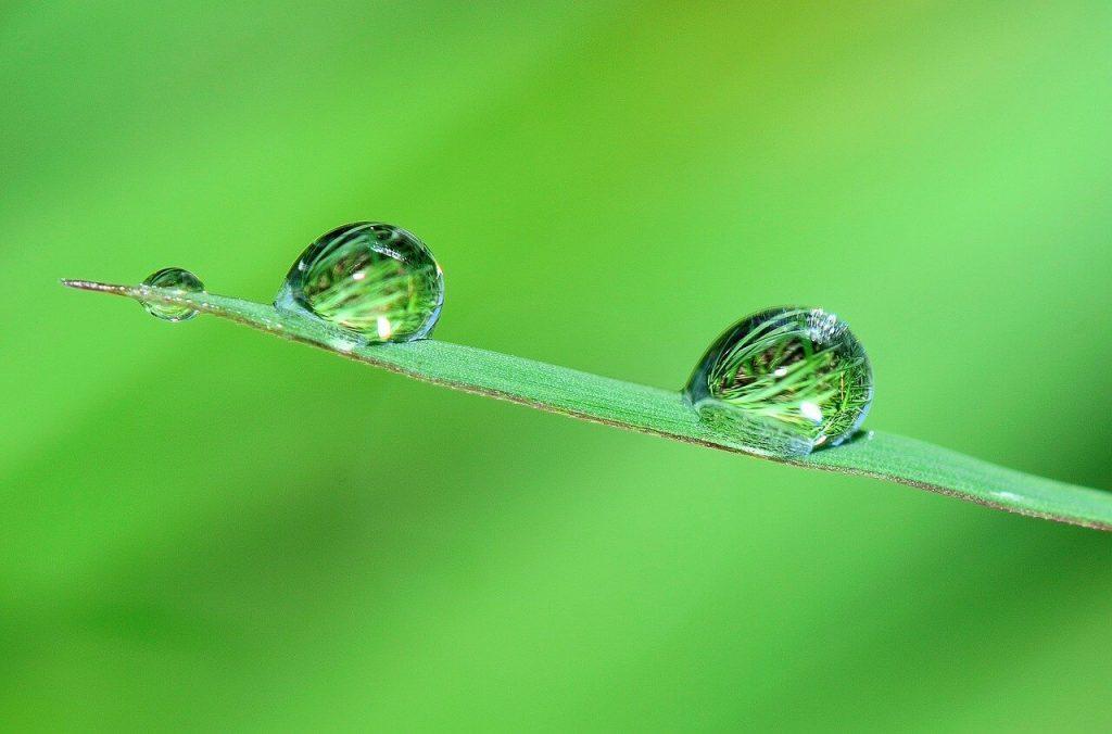 green-drops-water-leaf
