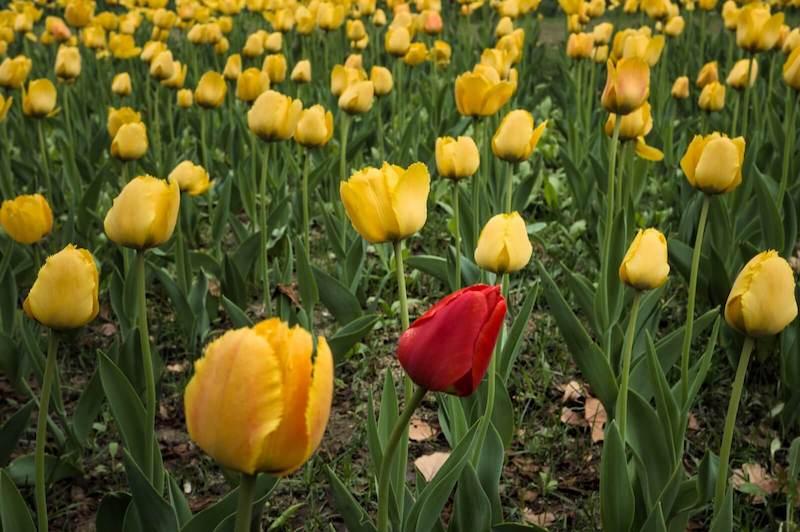 self-care-flowers