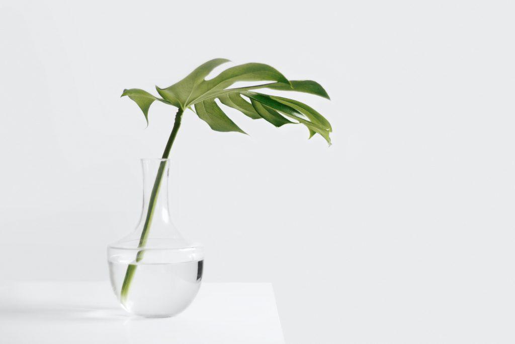 fresh-start-plant-in-vase