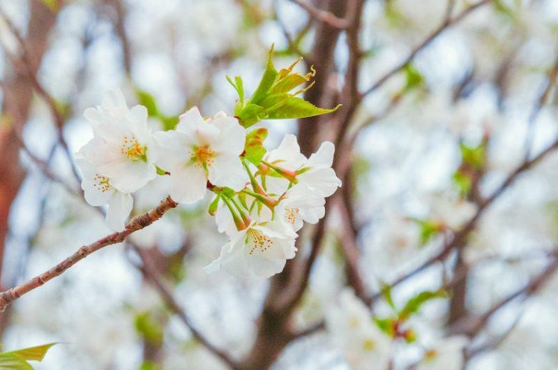 fresh-start-white-flowers